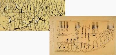 dibujos ramon y cajal